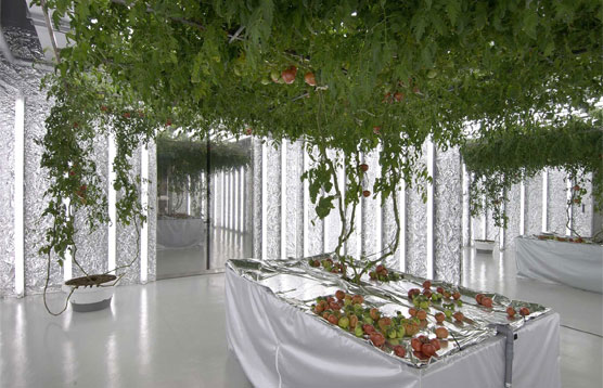 a grow room this size